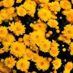 coleção de flores de laranja amarelas — Foto Stock