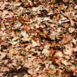 Dry brown leaves on ground - Stock Photo
