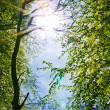 Royalty-Free Stock Photo: Sunshine and blue sky seen through green leaves.