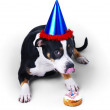Royalty-Free Stock Photo: Dog ready for party!