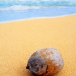 Royalty-Free Stock Photo: Lone Coconut on Secluded Beach in Hawaii