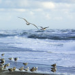 Seagulls by the sea - Stock Photo