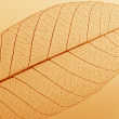 Leaf - with grain - Stock Photo