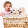 Young child and  puppies in a basket - Stock Photo