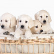 Royalty-Free Stock Photo: Cute puppies in basket. Isolated