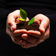 Plant being protected by mans hands new growth - Stock Photo