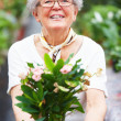 Royalty-Free Stock Photo: Portrait of a happy senior woman holding flower pot