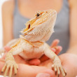 Closeup of female holding a bearded dragon - ストック写真