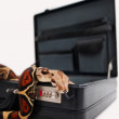 Python coiled up in an opened briefcase on white background - Stok fotoğraf