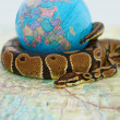 Endangered ball python coiled around a globe - Stock Photo