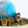 Royalty-Free Stock Photo: Endangered ball python coiled around a globe over white