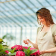 Young female at a greenhouse watering the flowers - Stock Photo