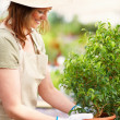 Pretty young female with a potted plant at a greenhouse - Stock Photo
