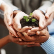Business development - Hands holding seedling in a group - Stock Photo