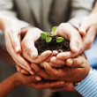 Business growth - Hands holding green plant indicating teamwork - Stock Photo