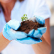 Royalty-Free Stock Photo: Woman hand holding a small growing green plant