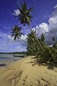 Tropical beach. — Stock Photo
