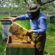 beekeeper — Stock Photo #3177925