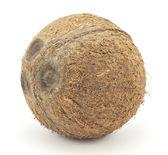 Large coconut — Stock Photo
