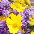 Background from a bouquet of wild flowers — Stock Photo #3498014