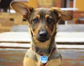 Dog — Stock Photo