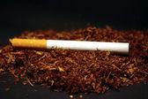 Tabak — Stock Photo