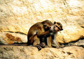 Apes — Stock Photo