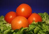 Tomatoe — Stock Photo
