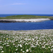 Machair in Uist, Western Isles, UK — Stock Photo