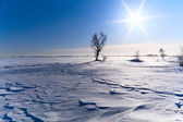 Tree in a snow-covered field — Stock Photo