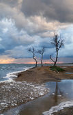 Lonely trees and heavy clouds — Stock Photo