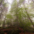 High mountain forest in mist - Stock Photo