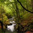 High mountain landscape of river in forest - Stock Photo