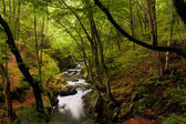 High mountain landscape of river in forest — Stockfoto