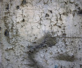 Texture: decay 3 — Stock Photo