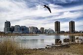 Condominiums across a pond — Stock Photo