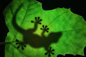 Lizard silhouette in the leaf — Stock Photo