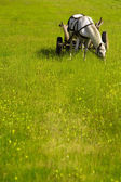Chariot on green field — Stock Photo