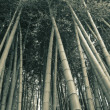 Bamboo forest background — Stock Photo #3143228