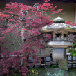 Japanese garden — Stock Photo #3144949