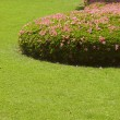图库照片: Cut grass lawn with bushes