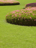 Cut grass lawn with bushes — ストック写真