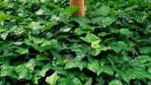 Verde folhas fundo — Fotografia Stock