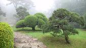 Japanese park in summer — Stock Photo
