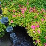 w ogród japoński — Zdjęcie stockowe #3520042