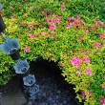 w ogród japoński — Zdjęcie stockowe