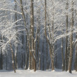 Beautiful winter trees in park — Stock Photo