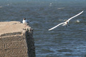 Two sea gulls — Stock Photo