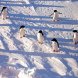 Stock Photo: Adelie penguins are watching the sunset