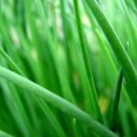 Fresh summer grass — Stock Photo #2720049